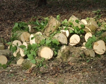 Log Pile, Flora and fauna, Natural Photography, Flower Photography