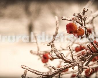 Winter Berry Celebration