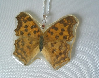 Real butterfly set in plastic resin pendant sterling 925 chain