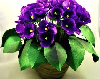 Paper African Violets Plant
