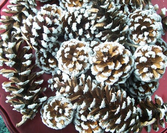Frosted Pine Cones, White Pine, Red Pine, or a mix, 1 dozen.  Winter Decor, Christmas, Pinecones, Holiday.