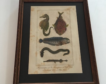 Custom-Framed Blowfish Print, 1823 Hand-Colored Copperplate Engraving, Stained Wood Frame
