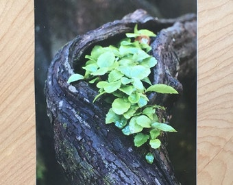 "Handmade Postcard: ""Little Pocket,"" 2016"