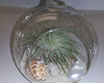 Hanging Air Plant Terrarium- Beach Themed