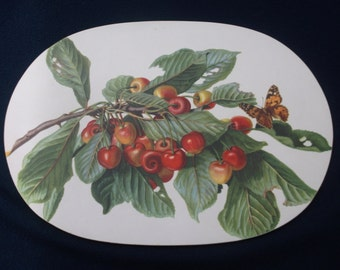 Lady Clare Placemats (set of 8) Fruit and Nut pattern