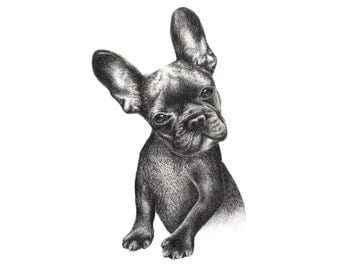 French Bulldog drawing, Limited Edition, Art Print, Graphite Drawing,  Art Print, Pet Portrait, Wall Art