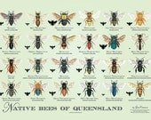 Native Bees of Queensland – Poster