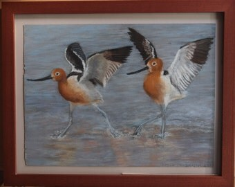 American Avocets -- soft pastel