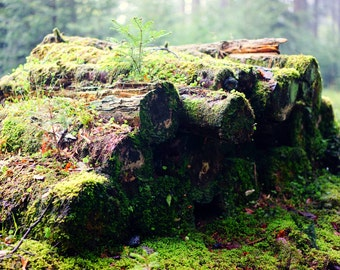 Logs Digital Photo - Logs Photography - Forest Photo - Nature Photo - Digital Photo - Digital Download - Instant Download - Wall Decor