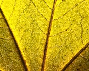 Leaf - Leaf Structure - Leaf Texture - Leaf Photo - Yellow - Yellow Photo - Digital Photo - Digital Download - Instant Download - JPG