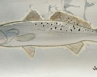 Speckled Trout No. 1