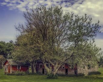 Hollandale Farm Scene