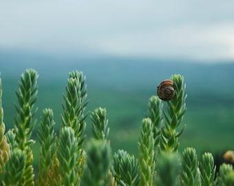 Tuscan Snail