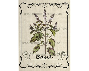 Digital Download Framed Basil Herb Illustration Transfer Clip Art; 1060
