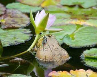 """Kissing Frogs Poster - VARIOUS SIZES 8x10"""" 10x10"""" 12x12"""" 12x16"""" 14x14"""" 16x16"""" 12x18"""" 18x18"""" 16x20"""" 18x24"""" 24x36"""""""