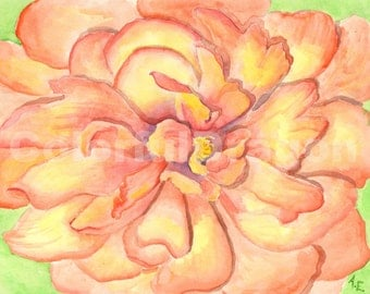 watercolor, painting, mum, flower, red, yellow