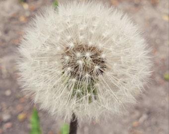 Sacred Wish - Dandelion