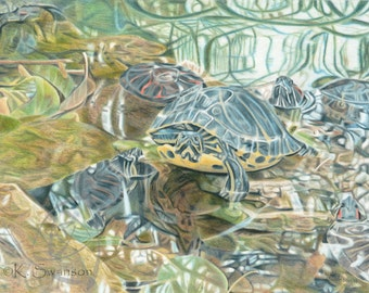 Painted Turtles/Swimming Turtle/Water/Reflection/Reflecting Pool/Mud Turtle/Giclee Print/Limited Edition/Drawing/Colored Pencil/Green/Nature