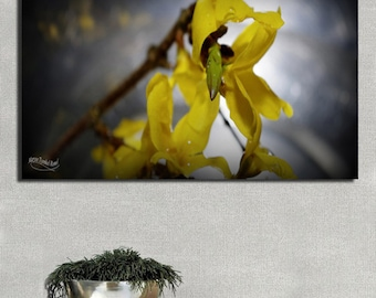 Yellow buds on a black background, photography on PVC 10mm, floral nature, decoration(set) nature, graphic decoration(set)