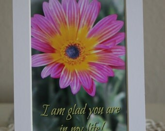 A pink daisy matted photograph