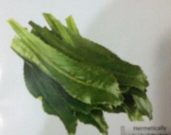Recao Culantro Eryngium foetidum Seeds 700mg