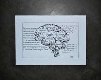 Original Anatomy - Brain Drawing.