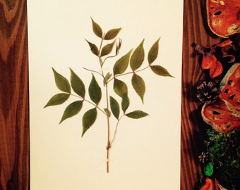 Herbarium 27