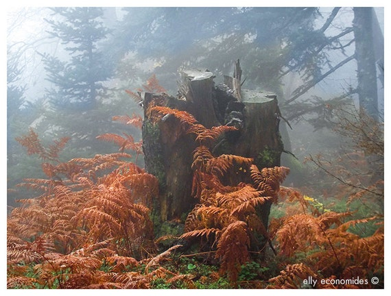 forest fairytale woodland misty wall art kids room elves fine art photography orange Into the woods, 030. 'Into the Woods'
