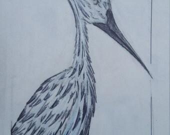Crane Sketch In Blue Pencil