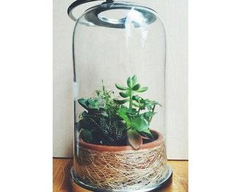 Terrarium, Succulent, Planting Glass, Home Decor, Urban Gardening, Indoor Gardening