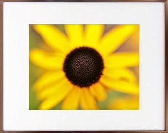 Spring Daisy1 Photographic Art