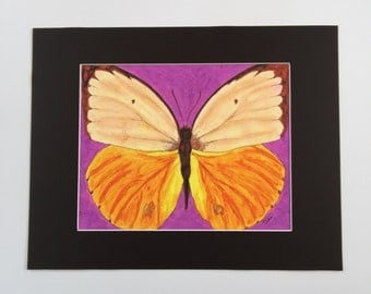 "Butterfly Art Print- ""Becoming Beautiful""-Becoming Series-Pen & Ink on Vellum- 11x14 Matted 8x 10 Giclee Print"