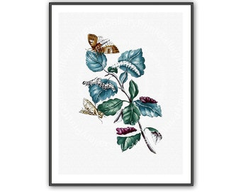 Butterflies Entomology Botanical Print Antique Nature Study Insect and  Flowers Berries Flora Natural History Vintage Wall Art Decor ag 091