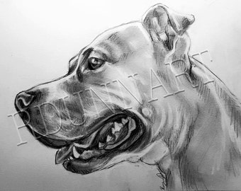 Custom Graphite Pet Portrait
