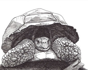 Tortoise - Pen and Ink