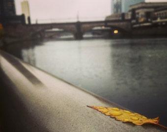 City Leaf