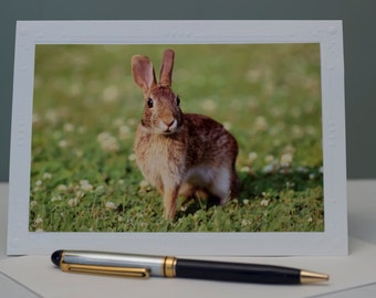 Photography Note Card, Photography cards, Animal Photography, Blank Note Cards, Greeting Cards, Bunny, Easter Card, Spring, mother's day