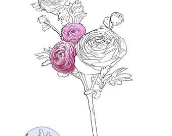 Digital Stamp-Ranunculus-Line Art for Cards & Crafts