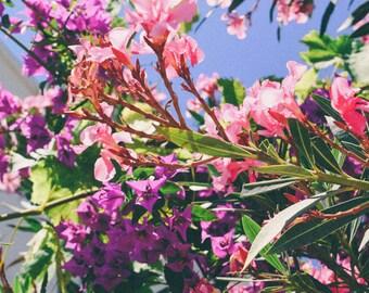 Flowers In Samos, Greece