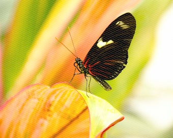 Heliconius Sparks