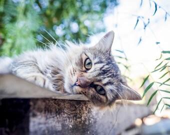 Happy Cute Cat Photo Print
