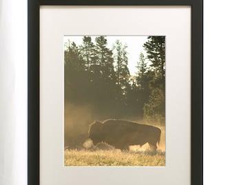 Wildlife Photograph - Buffalo at Dawn