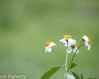 White and Yellow Wildflowers