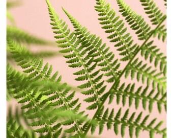 Fern Photograph - Fern Print - Floral Photography - Nature Photograph - Fine Art Photograph - Fern Study On Pink #5 - Green Art - Botanical
