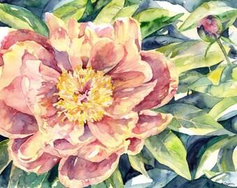 Watercolor Spring Peony Painting, Peony Art, Peony Original, Pink Peonies