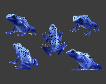 5 Blue Poison Dart Frog Vinyl Decals