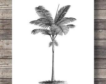 Vintage Palm illustration | Graphic print | Black and white | minimalist art | Tropical print | Botanical illustration | Printable wall art