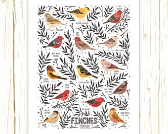 Finches of North America Field Guide Art Print - Classification Chart