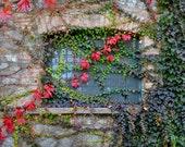 Colorful Leaves and Vines in Italy Photograph Fall Autumn Italian Villa Window Umbria Tuscany Italian Print