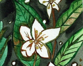 Forest Star Flower ACEO Original Watercolor Painting Nature Earth Botanical Illustration Artist Trading Card Miniature Art 2,5 x 3,5